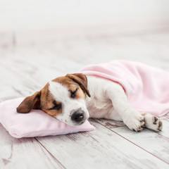 Sleeping puppy on small pillow