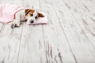 Obraz Sleeping puppy on small pillow - fototapety do salonu