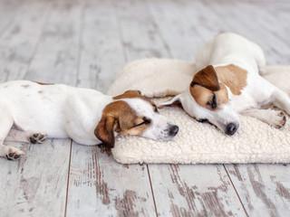 Dogs sleeping at floor