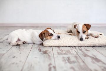 Two dogs sleeping on floor