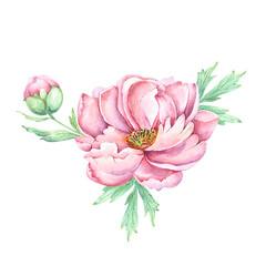 watercolor drawings flowers and buds peonies