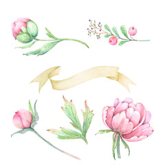 set of watercolor drawings of flowers peonies with decorative elements