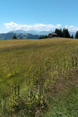 Wall Mural - old wooden barn in a wildflower meadow in  midst a Swiss mountain landscape