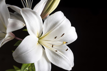 Photo sur cadre textile Fleur de lis White Lily on a black background.
