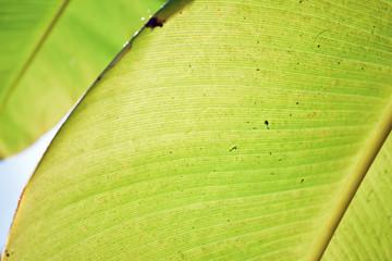 Backlit Leaf Close Up