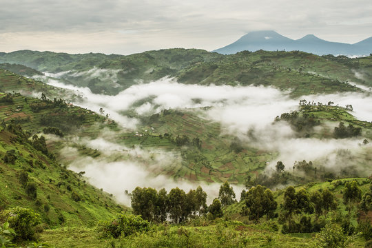 Typical hilly landscape full of fields partially covered in fog near the Bwindi Impenetrable National Park in Uganda