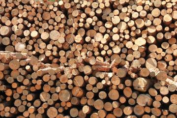 Aluminium Prints 大量に積まれた材木