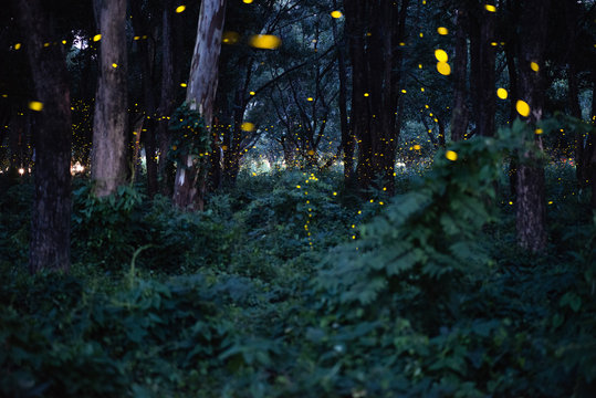 Abstract and magical image of Firefly flying in the night forest in Thailand, long exposure with grain.