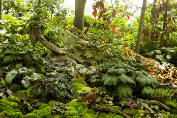 Forest Floor with Ivy and Moss