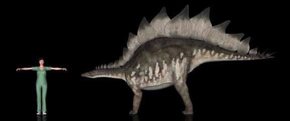 恐竜縮尺図・ステゴサウルス