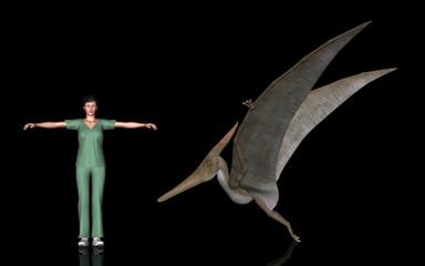 恐竜縮尺図・プテラノドン