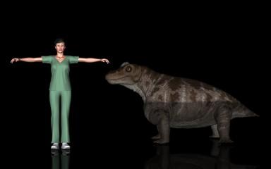 恐竜縮尺図・ケラトセフルス