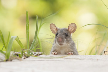 Rat eaten   back yard feeder