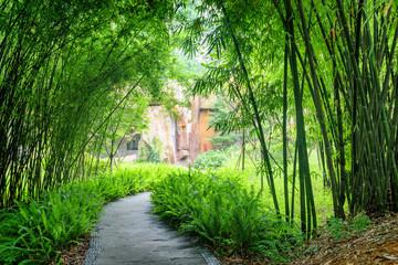 Shady stone walkway among ferns and green bamboo trees