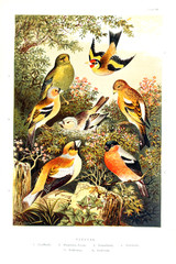 Collection of illustrated birds.