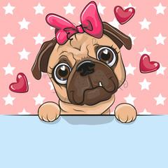 Cute Cartoon Pug Dog Girl is holding a placard on a stars background