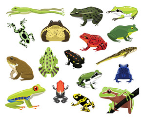 Various Frogs Cartoon Vector Illustration