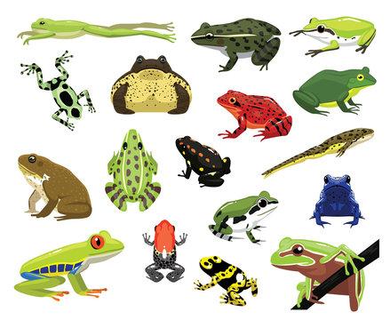 Various Frogs Cartoon Vector Illustration