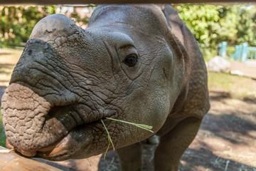 baby rhino at the zoo