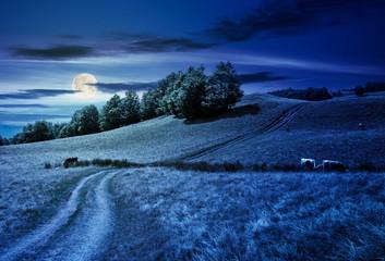 path uphill through grassy meadow