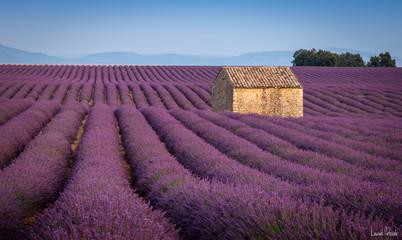 Wall Murals Lavender Lavande - Plateau de Valensole - Provence