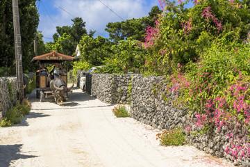 Wall Mural - 竹富町の牛車観光
