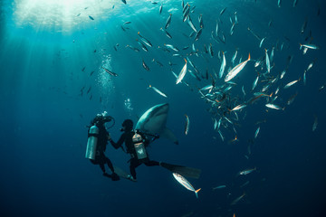 Wall Mural - Extreme shot with great white shark underwater