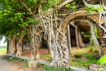 An ancient temple full of roots sticking Bodhi withstand over time. The temple is deserted but attracts people to take pictures