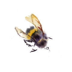 Watercolor bees isolated on white background. hand drawn watercolor illustration
