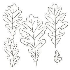vector contour trees oak leaf botanical hand drawn sketch coloring book