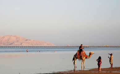 People take a souvenir picture with a camel on a beach in the Aqaba Gulf in front of Tiran island which transferred Into Saudi Arabia last year, on the Red Sea resort of Sharm el-Sheikh, south of Cairo