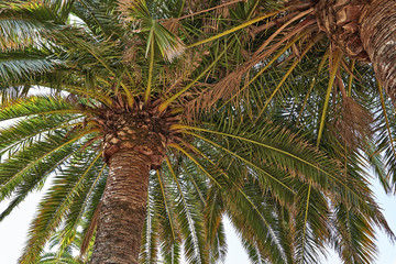 Branchs of beautifull palm tree