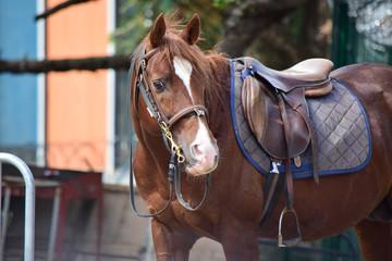 beautiful standing brown horse looking at camera