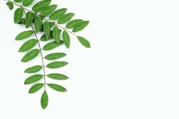 Small Green Leaves Isolated On White Background and copy space design your text .