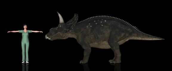 恐竜縮尺図・ディケラトプス