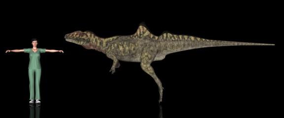 恐竜縮尺図・コンカヴェナトル