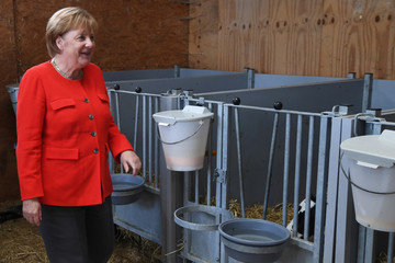 German Chancellor Angela Merkel visits a dairy farm in Nienborstel