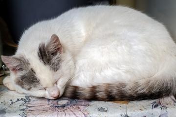 a cat sleeps on the yard table