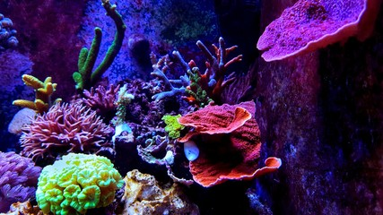 Deurstickers Onder water Saltwater dream coral reef aquarium tank scene