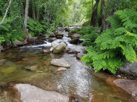 Bosque de rivera, garganta de agua, helechos