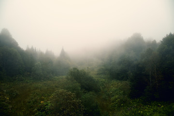 Foggy landscape with green tress forest in myst, moody natural mountain background