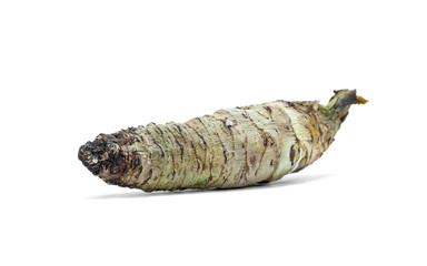 wasabi root isolated on white background