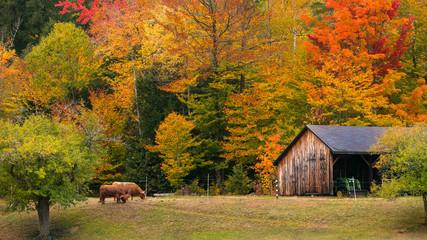 Fall Farm in New England