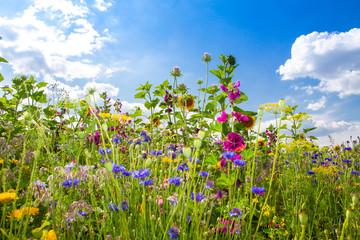 Feld mit bunten Sommerblumen Fotoväggar