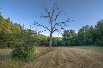 toter Baum 1