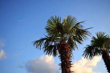 Palm against the blue sky on a sunny day