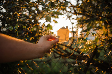 a small paper house made of cardboard is held with one hand against the background of a Sunny sunset and tree branches with green leaves.