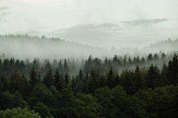 Beautiful foggy forest in the heart of Czech republic