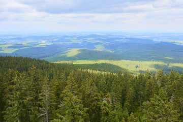 Spruce trees in Sumava (Bohemian Forest) National Park, Czech Republic
