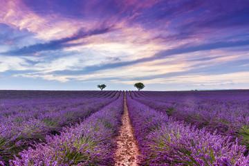 Wall Murals Lavender Crépuscule dans un Champ de lavande à Valensole en Provence, France